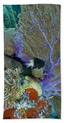 A Bi-color Damselfish Amongst The Coral Beach Towel
