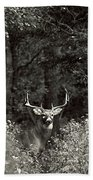 A Big Buck In Rut Beach Towel