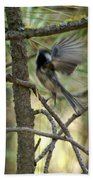 A Black Capped Chickadee Taking Off Beach Towel