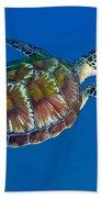 A Black Sea Turtle Off The Coast Beach Towel by Michael Wood