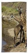 A Bouquet Of Giraffes Beach Towel