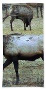 A Bull Elk  Beach Towel