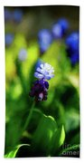 A Bunch Of Flowering Two-tone Grape Hyacinths, No.2. Beach Towel