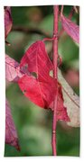 A Bunch Of Red Leaves Beach Towel
