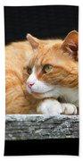 A Cat Named 'kitty' Beach Sheet
