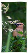 A Cedar Waxwing Facing Left Beach Towel