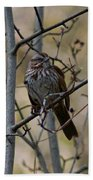 A Chipping Sparrow Beach Towel