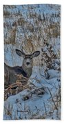 A Christmas Day Young Buck Beach Towel