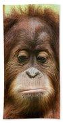 A Close Portrait Of A Sad Young Orangutan Beach Towel