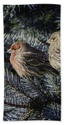 A Couple Of House Finch Beach Sheet by LeeAnn McLaneGoetz McLaneGoetzStudioLLCcom