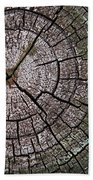 A Cut Above - Patterns Of A Tree Trunk Sliced Across Beach Towel