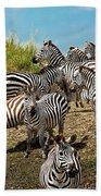 A Dazzle Of Zebras Beach Towel