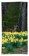 A Deer And Daffodils 4 Beach Towel