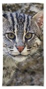 A Fishing Cat Portrait Beach Towel