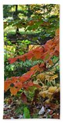 A Flame In The Forest Beach Towel