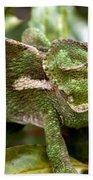 A Green Chamaeleonidae Beach Towel