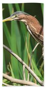 A Green Heron Stalks Prey Beach Sheet