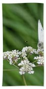 A Green-veined White (pieris Napi) Beach Towel by John Edwards