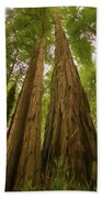 A Group Giant Redwood Trees In Muir Woods,california. Reaching F Beach Towel