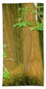 A Group Giant Redwood Trees In Muir Woods,california. Beach Towel