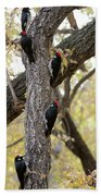 A Group Of Acorn Woodpeckers In A Tree Beach Towel