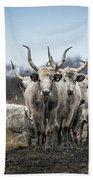 Grey Cattle Herd Beach Towel