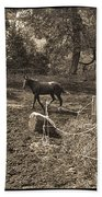 A Horse In The Field Beach Towel