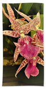 A Living Orchid Looks Like Animal Print Doesnt It So Beautiful Beach Towel