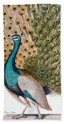 A Male Peacock In Full Display, 1763 Beach Towel