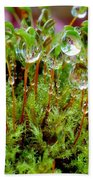A Microcosm Of The Forest Of Moss In Rain Droplets Beach Towel
