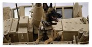 A Military Working Dog Sits On A U.s Beach Towel