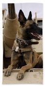 A Military Working Dog Sits On A U.s Beach Sheet