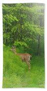 A Morning Stroll  Beach Towel