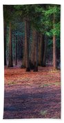 A Path Of Redwoods Beach Towel