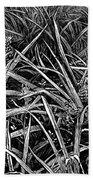 A Pineapple Field Near Nassau, Bahamas, 1883 Beach Towel