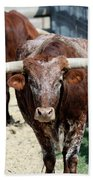 A Portrait Of A Texas Longhorn Steer Beach Towel
