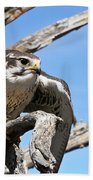 A Prairie Falcon Against A Blue Sky Beach Towel