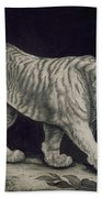 A Prowling Tiger Beach Towel