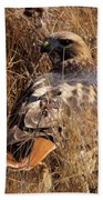 A Red Tailed Hawk  Beach Towel