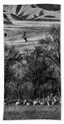 A Sedge Of Sandhill Cranes Beach Towel