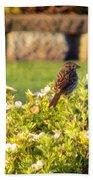 A Sparrow Surveys Beach Towel