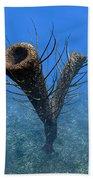 A Species Of Pirania, A Primitive Beach Towel