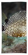 A Spotted Trunkfish, Key Largo, Florida Beach Towel