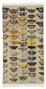 A Study Of Moths Characteristic Of Indo Beach Towel