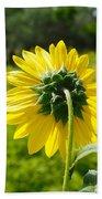 A Sunflower's Backside Beach Towel