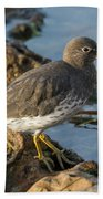 A Surfbird At The Tidepools Beach Towel