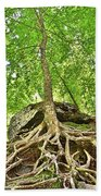 A Tree And It's Roots Beach Towel