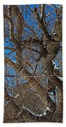 A Tree In Winter- Horizontal Beach Towel