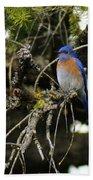 A Western Bluebird In A Tree Beach Towel