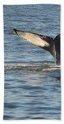 A Whale Of A Tail Bar Harbor Beach Towel